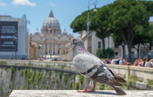 The Vatican, Dove, Bird, Nature, Architecture, Rome