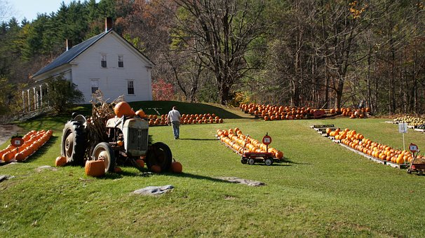 New England, Farm, Pumpkins, Maine, Tractor, Fall