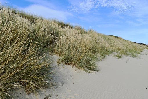 Australia, Beach, Beach Grass, Summer, Ocean, Sand