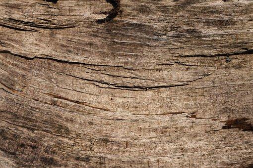 Bark, Beech, Tribe, Log, Background Wood, Pattern