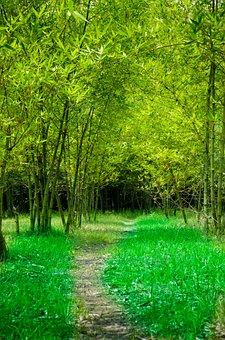 Bamboo, Garden, Road, Green, Green Road