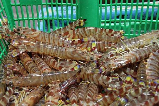 Tokyo, Fish, Market, Seafood, Fresh, Raw, Healthy