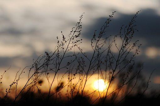 Sunset, Twilight, Abendstimmung, Sky, Clouds, Plant