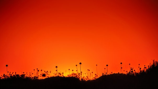 Red, Evening, Plant, Silhouette, Sunset, Sky, Afterglow