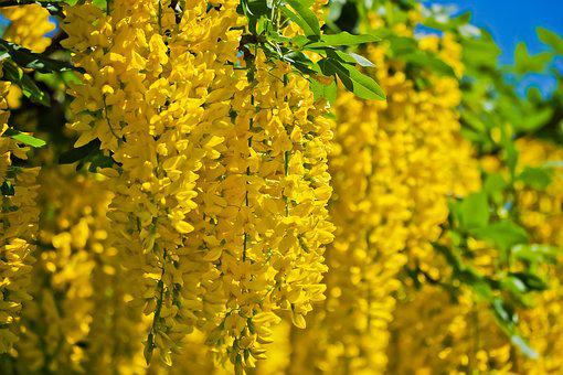 Tree, Flowers, Spring, Nature, Garden, Bloom