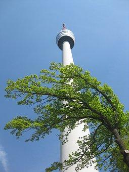 Tower, Tree, Sky, View, Stuttgart, Tv Tower