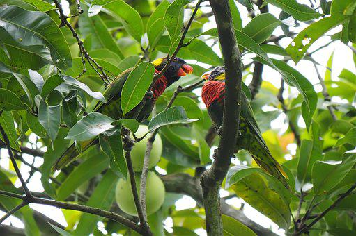 Parakeet, Green, Lorry, Animal, Bird, Wild, Wildlife