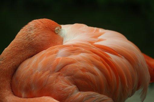 Flamingo, Animal, Bird, Disengage, Wildlife Photography