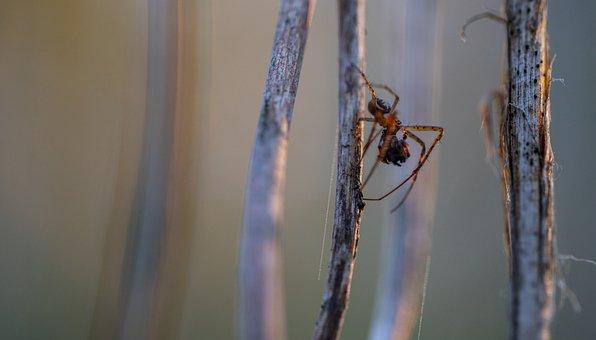 Macro, Spider, Arachnids, Extraction