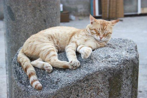 Cat, Asleep, Sleep, Column, Pierre, Beige