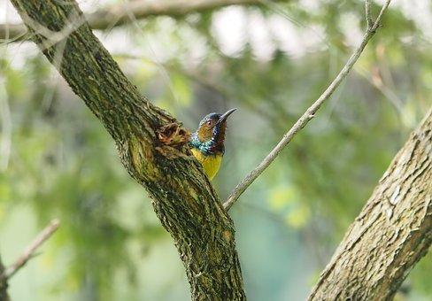 Nature, Tree, Bird, Park, Sunbird, Natural, Season