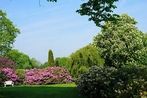 Rhododendron, Garden, Blossom, Bloom, Early Summer