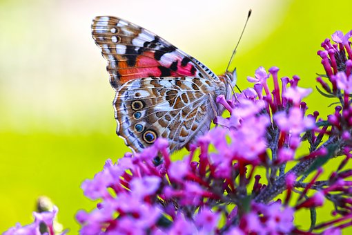 Butterfly, Flowers, Spring