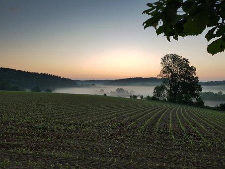 Sunrise, East, Tree, Fog, Arable, Cornfield, Forest