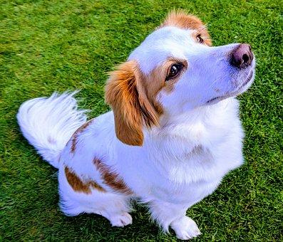 Dog, Puppy, Doggy, Looking Up, Kokoni, Cyprus