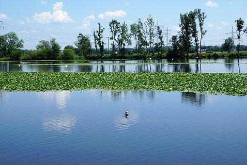Danube, Ehingen, Ulm, Germany, River, Europe, Nature