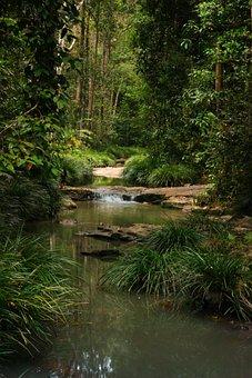 Forest, Landscape, Nature, Green, Natural, Summer