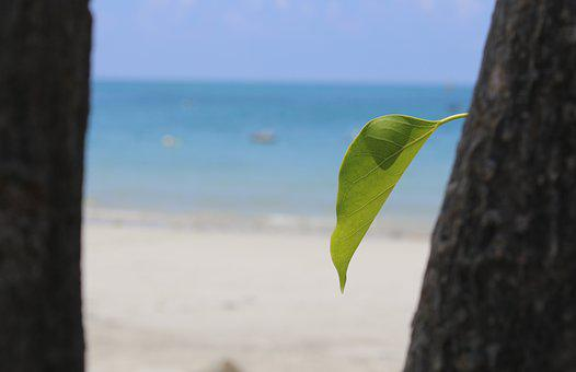 Leaf, Beach, Condao, Vietnam, Green, Ocean, Tree, Sea