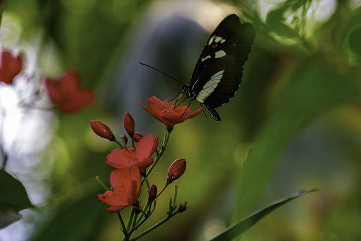 Butterfly, Flower, Red, Natural, Insect, Flowers