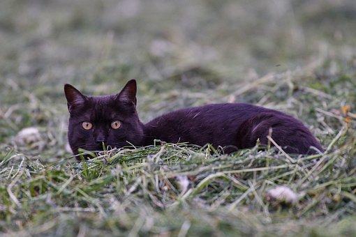 Cat, Concerns, Face, Eyes, Cat's Eyes, Kitten, Cat Face