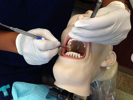 Dental Assisting, Mannequin, Head, Mouth