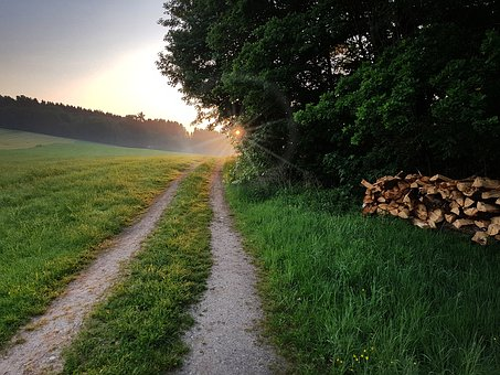 Sunrise, East, Fog, Lane, Meadow, Edge Of The Woods