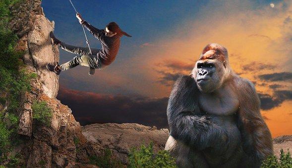 Gorilla, Monkey, Climb, Help, Risk, Powerful, Ape, View