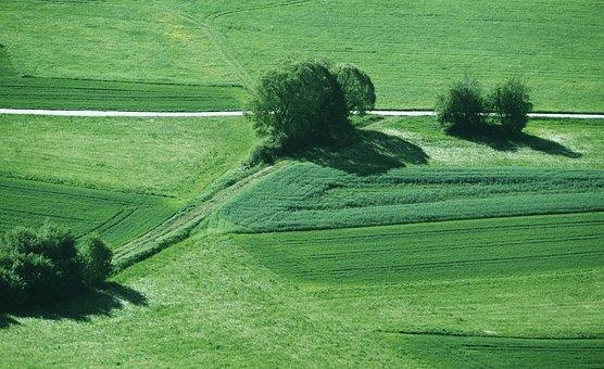 Lane, Arable, Meadow, Lines, Landscape, Sunny, Morning