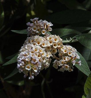 Flower, Nature, Spring, Floral, Garden, Blossom, Summer