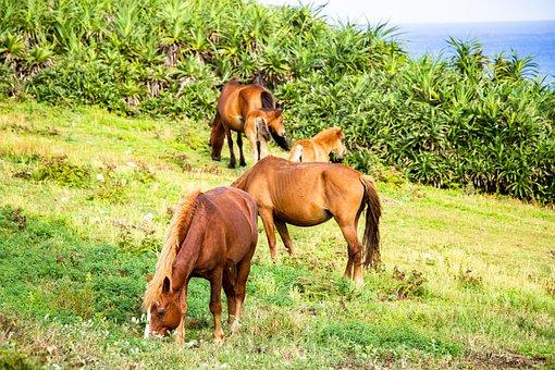 Horse, Meadow, Landscape, Nomad, Parent Child, Grass