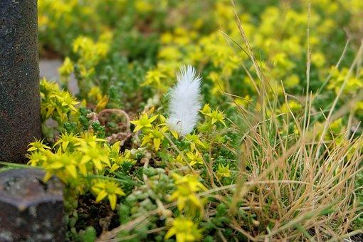 Pen, Saxifrage, Flowers, Nature, Plant, Plumelet, Macro