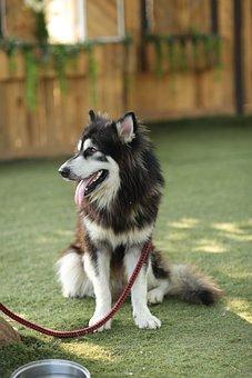 Dog, Pet, Animal, Cute, Puppy, Nature