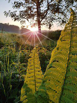 Sun, Fern, Morning, Green, Plant, Nature, Forest