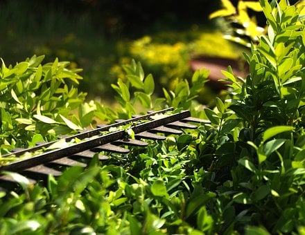 Hedge, Cut, Formschintt, Garden, Green, Nature, Plant