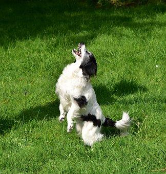 Dog, Play, Catch, Food, Animal, Playing Dog, Young Dog