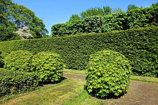 Shorn Hedge, Shorn Bush, Hedge, Bush, Foliage, Pruning