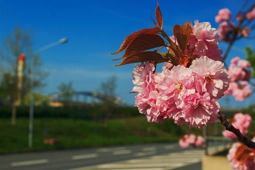 Riesa, Bridge, Elbe, Flower, Steel Bridge, Nature, Sky