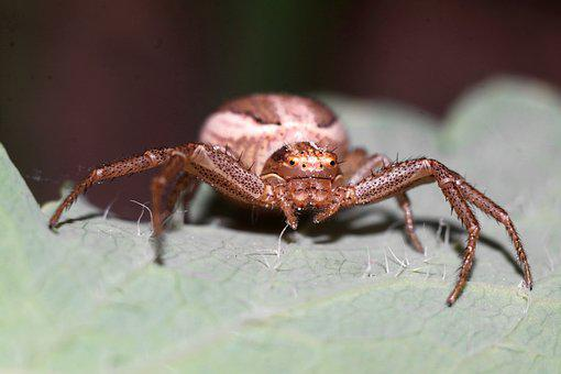 Spider, Insect, Nature, Macro