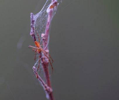 Spider, Spider Web, Macro