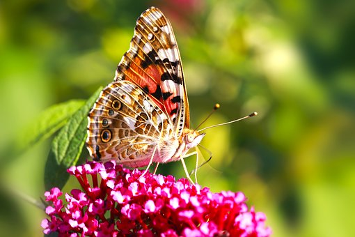 Macro, Butterfly, Flowers, Spring