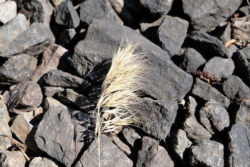 Withering, Stones, Autumn, One, Stone, Withered