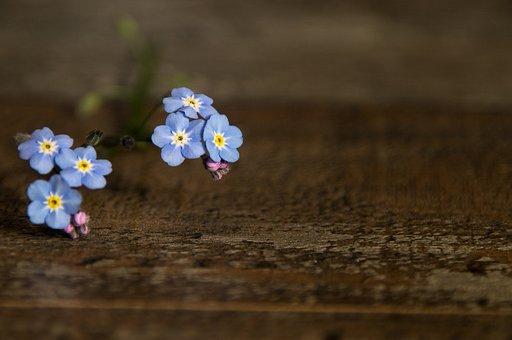 Blossom, Bloom, Blue, Deco, Wood, Summer, Invitation