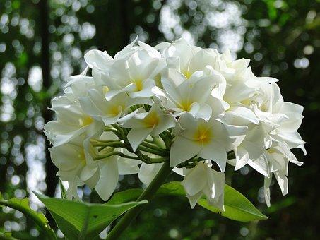 Flower, Wild, Wild Flowers, Plant, Nature, White, Green