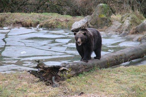 Animal, Bear, Brown Bear, Enclosure, Zoo