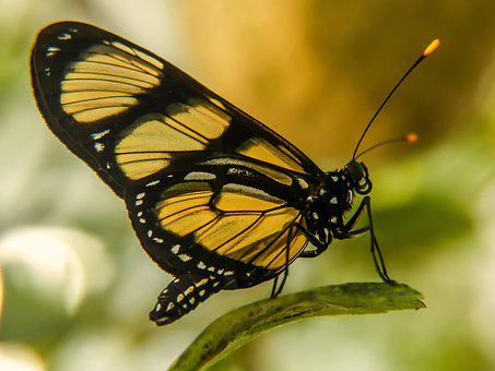 Nature, Butterfly, Insect, Animal, Colorful Butterfly