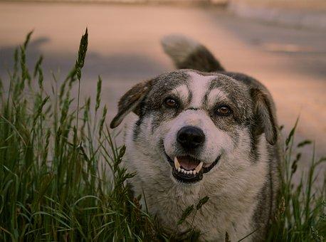 Dog, Animals, Portrait, Nature, Cute, Puppy, Nice