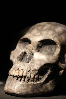 Skull, Art, Potery, Artistic, Artwork, Dead, Head