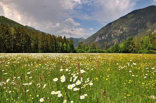 Nature, Landscape, Spring, Blossom, Bloom, Flowers