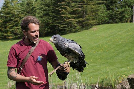 Aguja, Wild Bird, Blue Buzzard, Flugshow