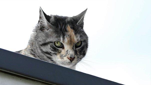 Cat, Cat Portrait, Domestic Cat, Colorful, Hide Nose